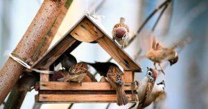 В Воронежской области продолжается акция «Покорми птиц зимой»