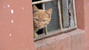 Фонд «Право на жизнь» попросил воронежцев о помощи со сбором средств и вещей для животных