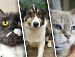 TV Губерния запускает совместный с Фондом помощи бездомным животным «Право на жизнь» проект «Будь другом»
