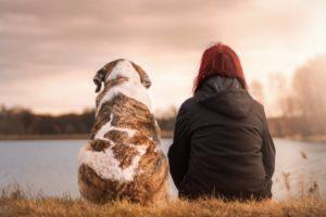 Конкурс на лучший благотворительный проект помощи животным